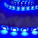 Светодиодная лента smd 5050, синие свечение, на белой основе (водонепроницаемая), 60 led на 1 метр